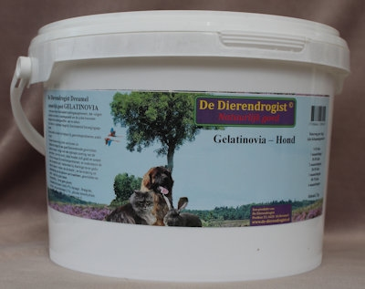 Gelatinovia - Hond AKTIE