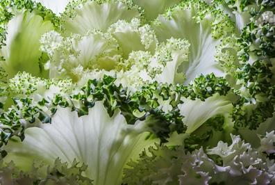 Maca wortel - Lepidium peruvianum  100 gram