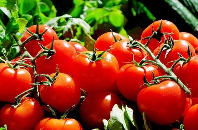 Tomaat - Solanum lycopersicum  100 gram