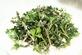 Absint (alsem) - Artemisia absinthium 100 gram