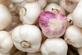 Knoflook poeder - Allium sativum