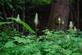 Duivelsklauw - Harpagophytum procumbens 100 gram